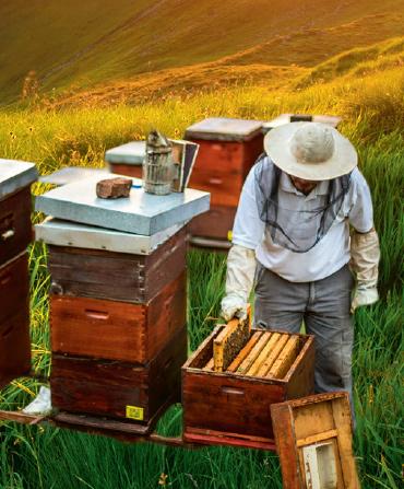 Arkoroyal Bio Méhészeti Termékek